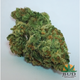 Bud deliveries620160803 21290 xocyk4