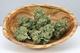 Life flower dispensary recreational2720160804 26143 1l7n73m