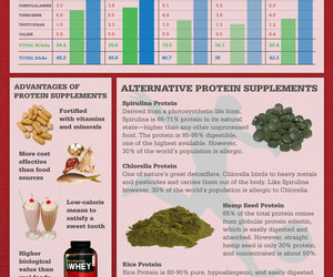 Protein Supplement Guide