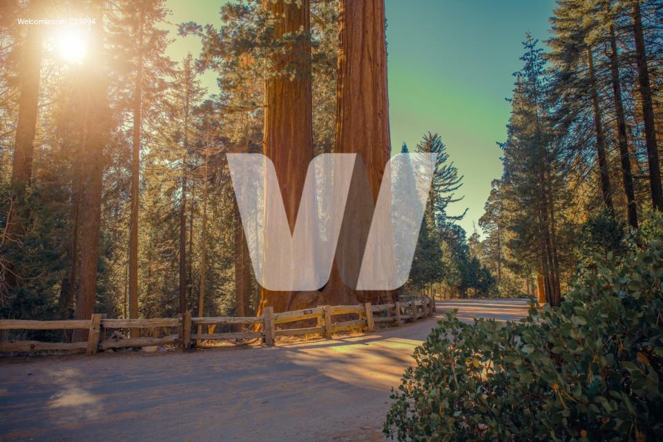 Sequoias National Park Road