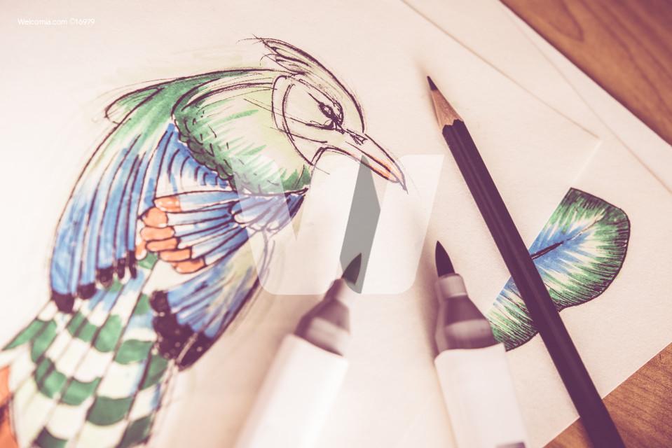 Artistic Birds Drawing