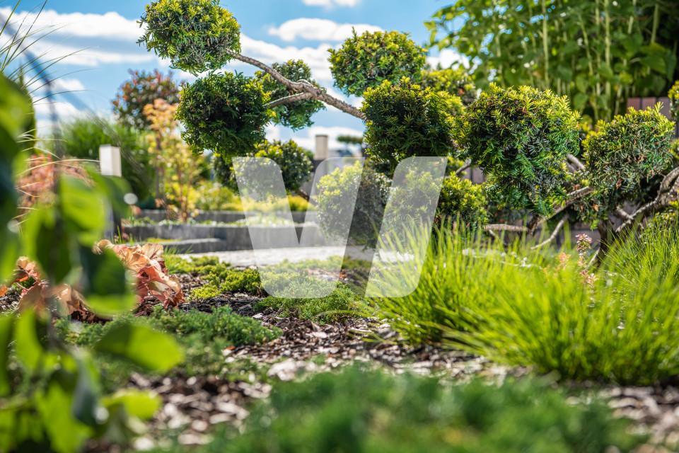 Beautiful Backyard Garden Plants