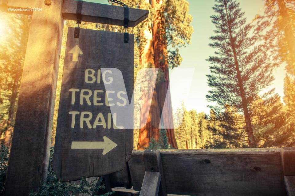 Big Trees Trail Sign