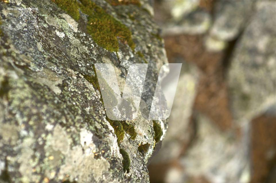 Colorado Rocks