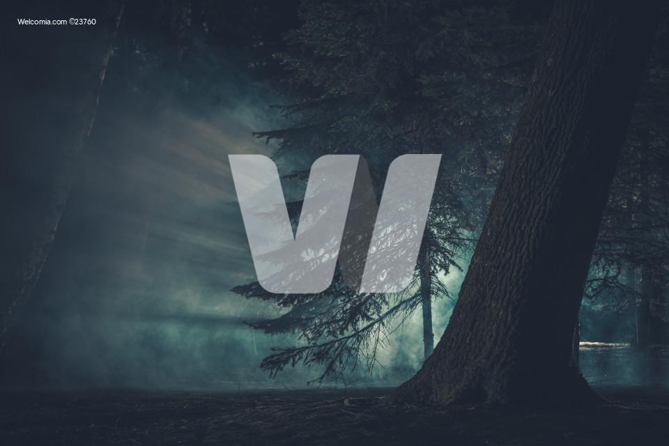 Dark Mysterious Forest Covered by Strange Fog