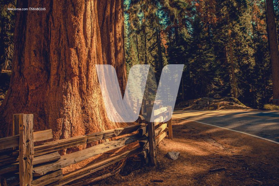Exploring California Sequoias National Park