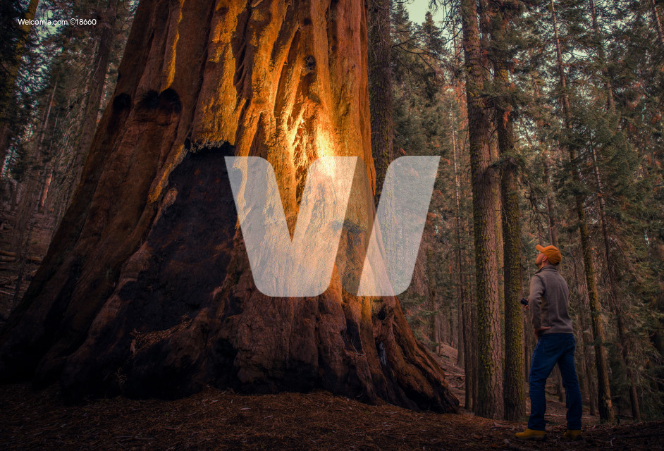 Exploring Giant Sequoia Forest