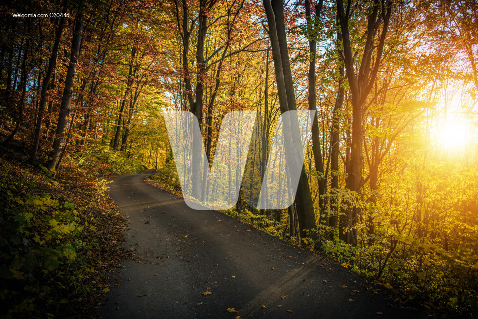 Fall Foliage Forest Route