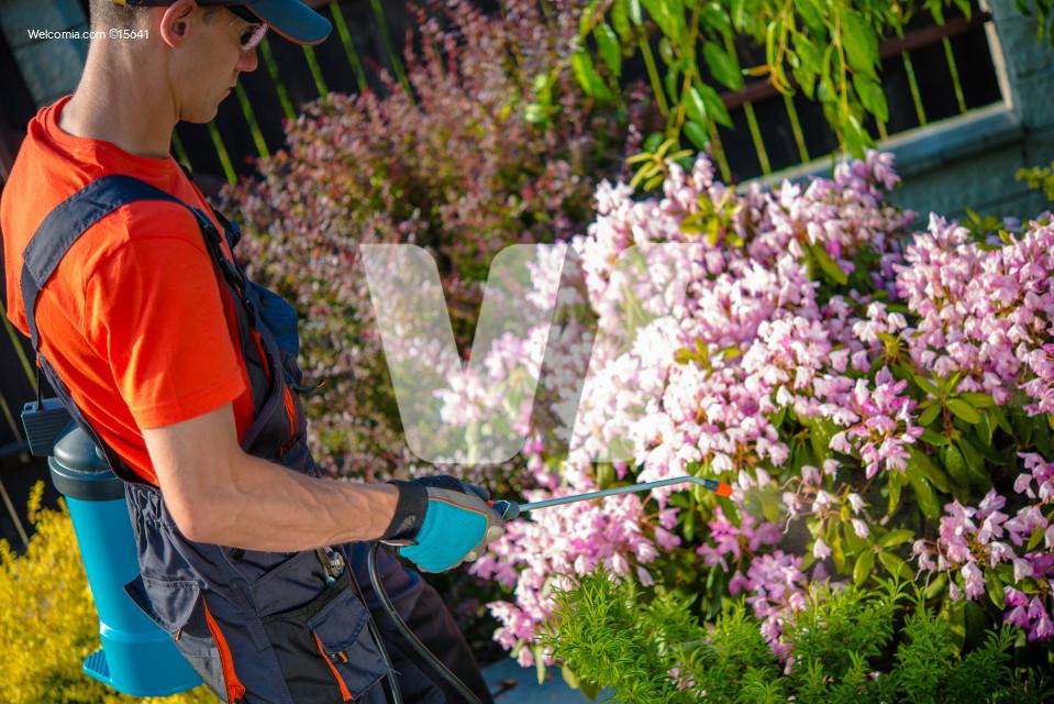 Flowers Pests Spraying