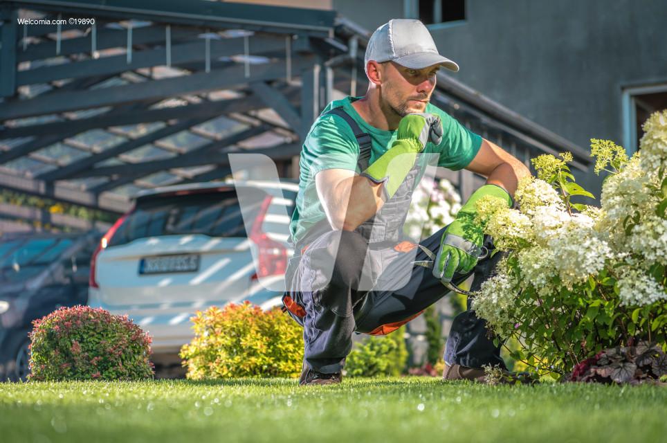 Garden Flowers Maintenance