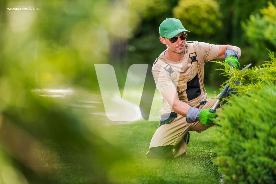 Garden Worker Trimming Decorative Garden Plants