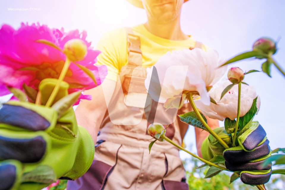 Gardener and Flowers Care
