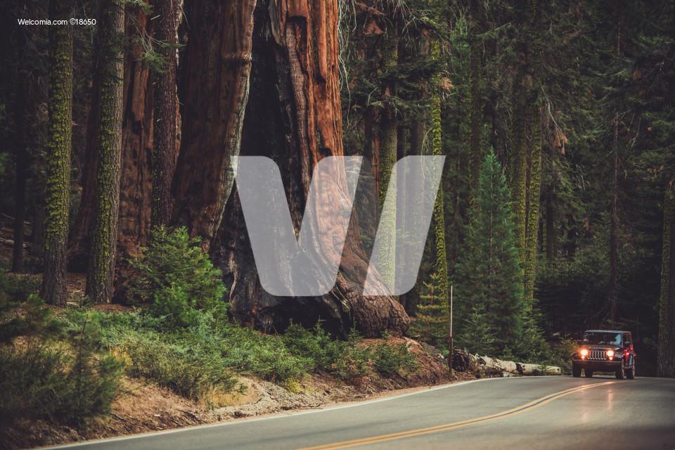 Giant Sequoia Generals Highway