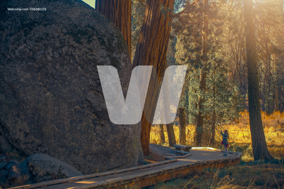 Girl Taking Pictures In Giant Sequoia National Park