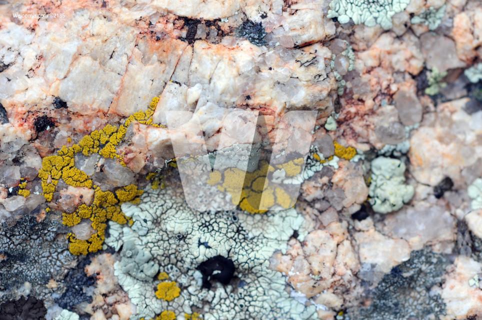 Granite Plants