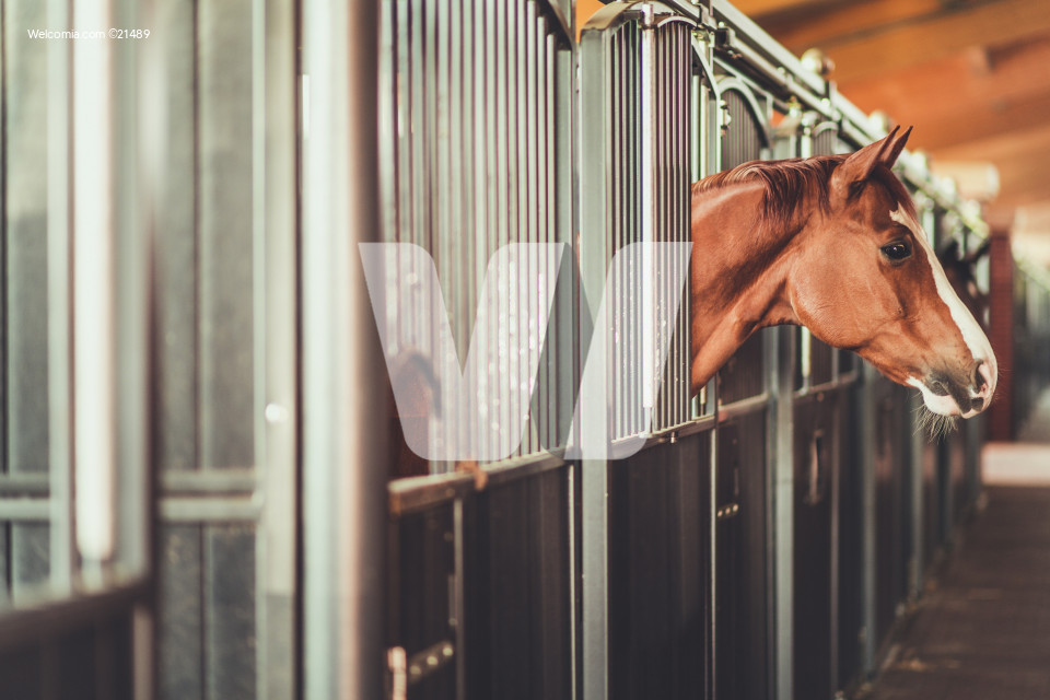 Horses in a Modern Stable