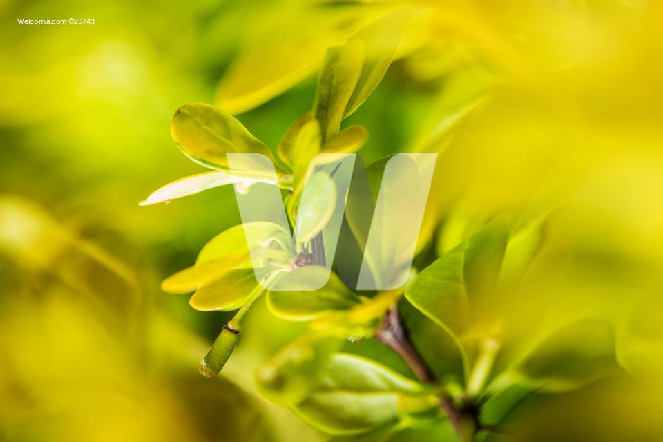 Macro Photo of Green Garden Plant Leaves