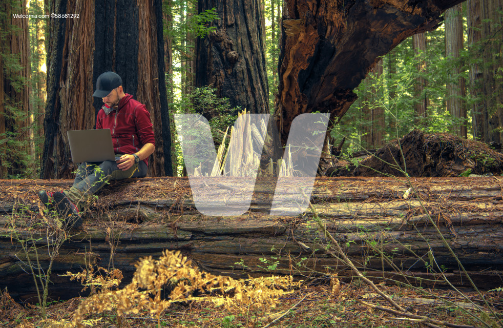 Men Remotely Working From Redwood Forest