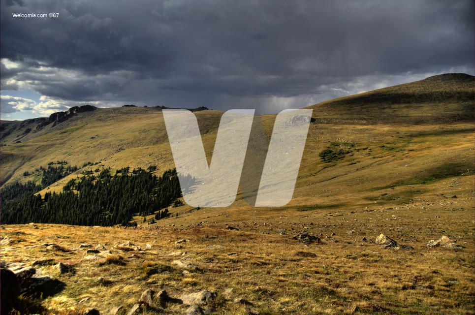 Mountain\\\'s Meadow