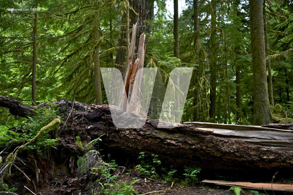 Rainforest Damaged Tree