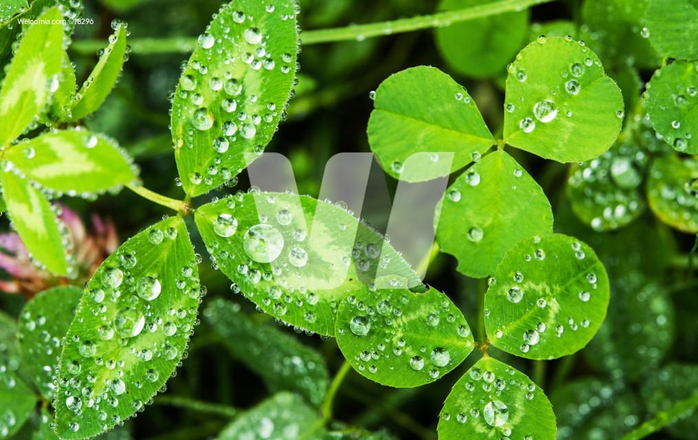 Rainy Day Nature Concept
