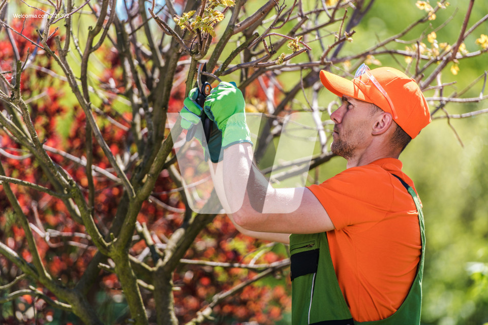 Removing Tree Branches