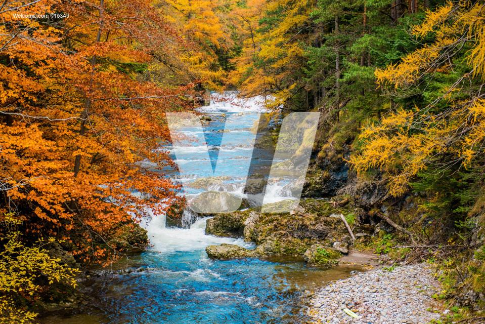 Scenic Autumn Fall Foliage