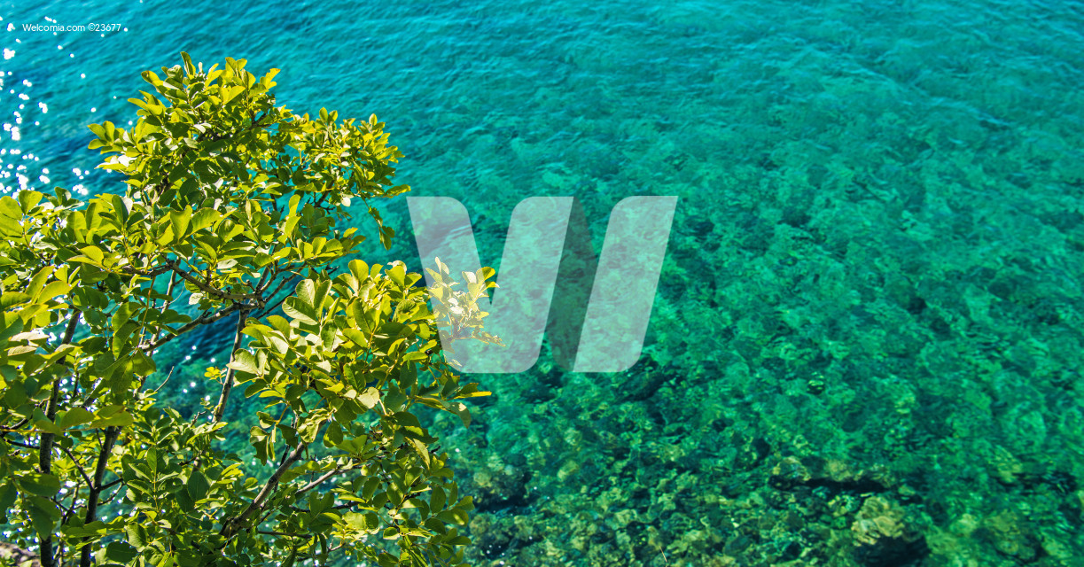 Scenic Turquoise Sea Shore