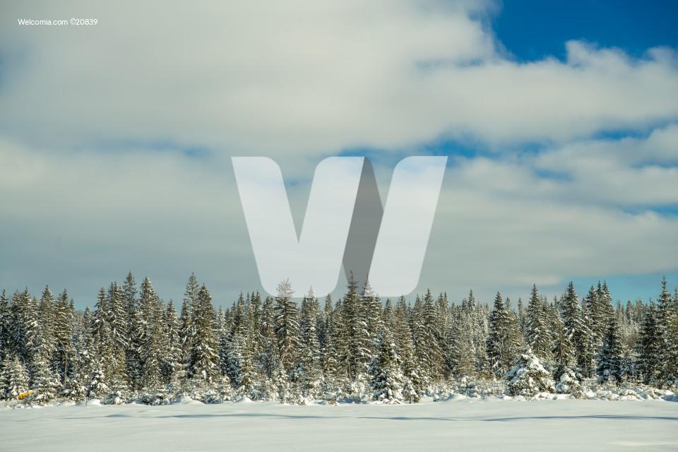 Scenic Winter Background