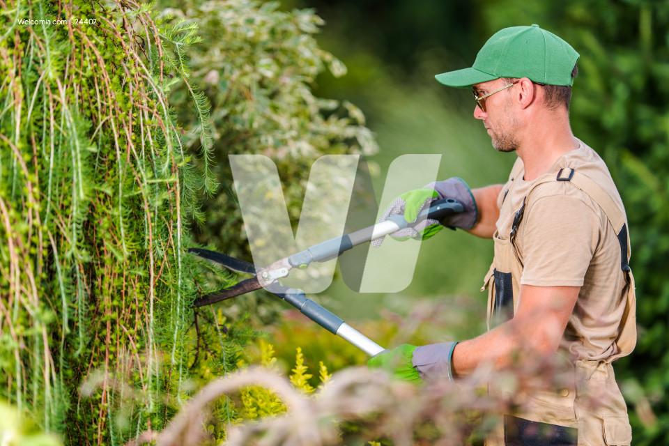 Seasonal Garden Plants Trimming Work