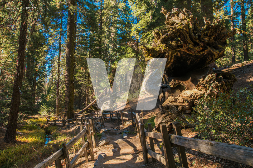 Hiking Trail In Sequoia National Park.