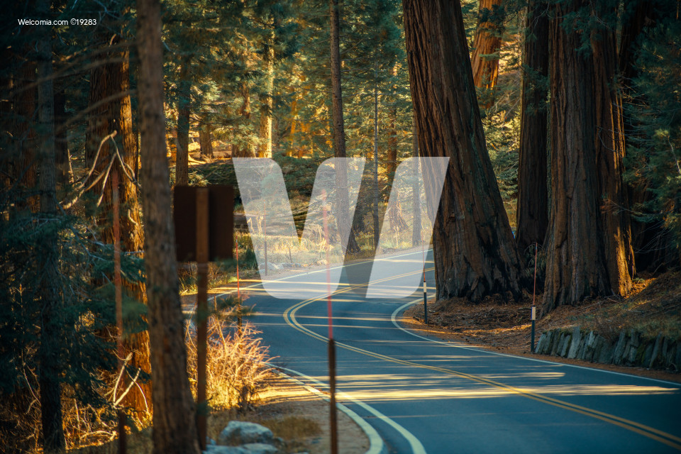 Sequoia Park Road Trip