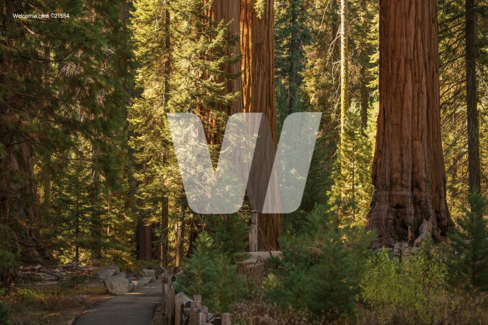 Sequoias National Park Place