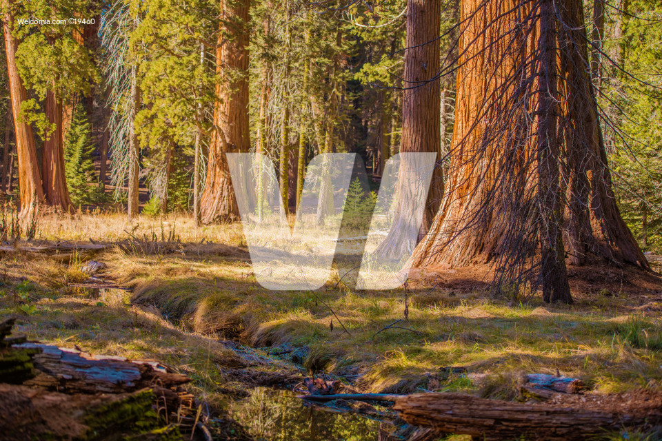 The Giant Sequoias Place