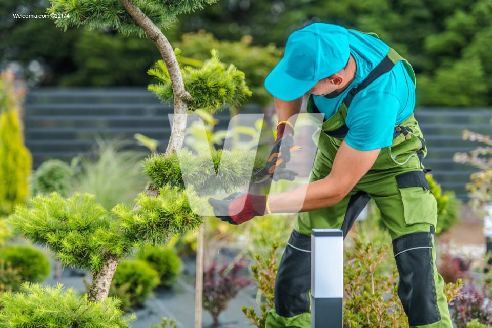 Trimming Backyard Garden Plants