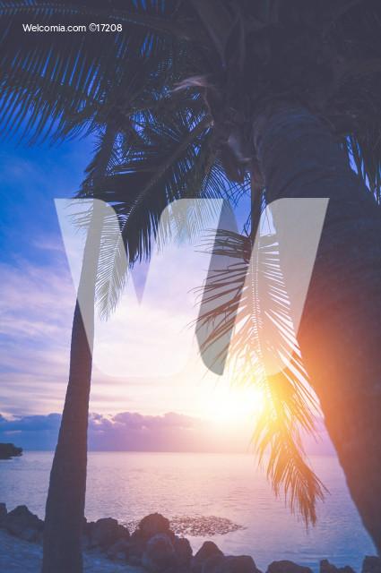 Tropical Vacation Sunrise