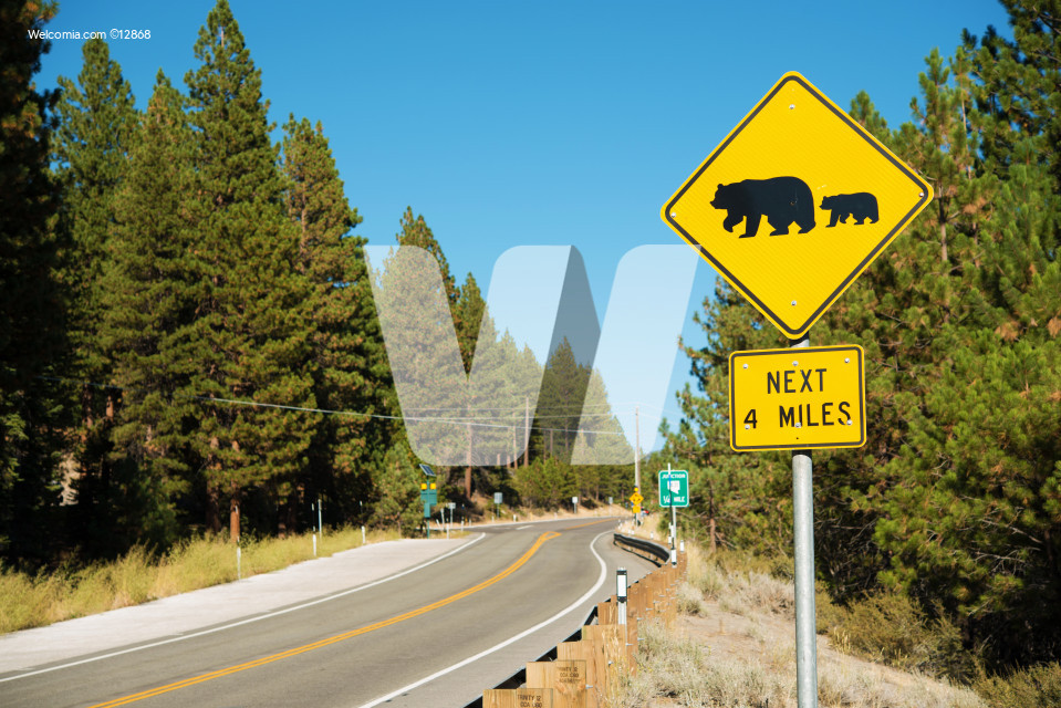 Watch For Bears Street Sign