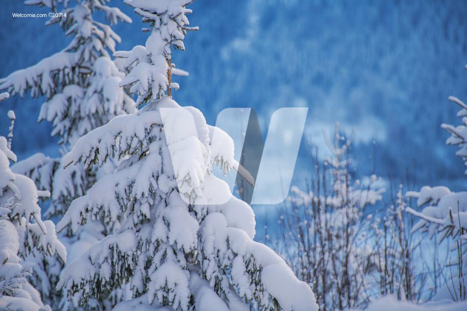 Winter Mountains Foliage