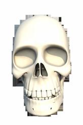 3D Human Skull PNG