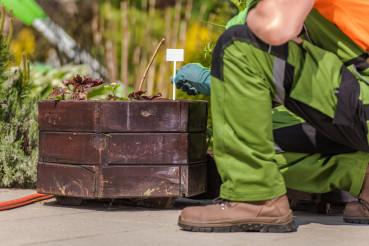 Gardener Tags Greenery In Planters.