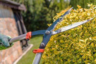 Close Up Of Gardener Pruning Bushes With Loppers.