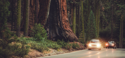 Road In National Park To Explore Enormous Sequoias.