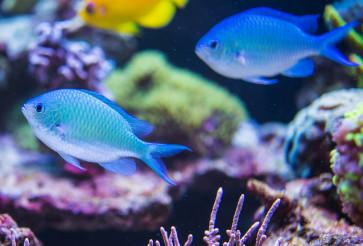 Small Fish In Natural Marine Environment