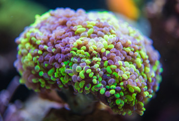 Fragment Of Soft Coral Reef In Ocean.