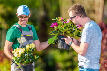 Two Man Choosing Plants For Landscaping Job.