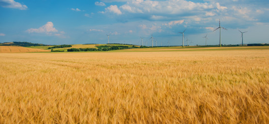 View Of Wheat Farm And Wind Mills.