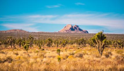 Mojave Desert Scenery