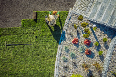Landscaping Contractor Installing New Turf In Backyard.
