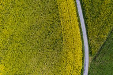Aerial Vista of Countryside Farmlands Rapeseed Field