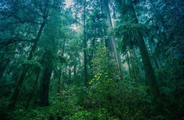 American Northwest Rainforest